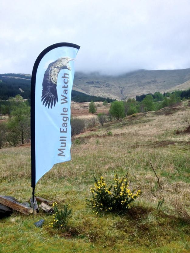 Mull eagle watch flag