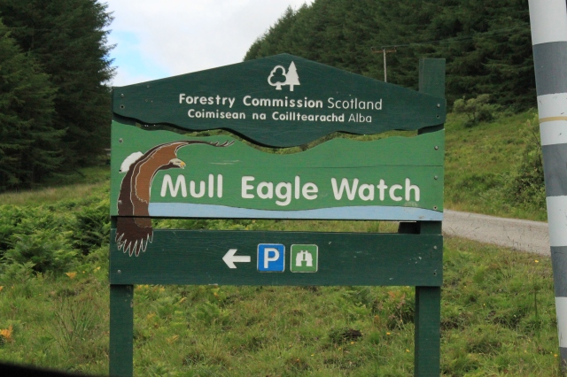 Mull Eagle Watch