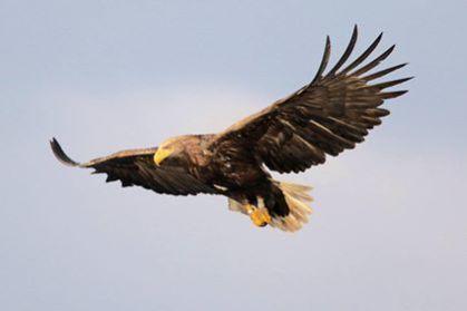 Eagle C9 23