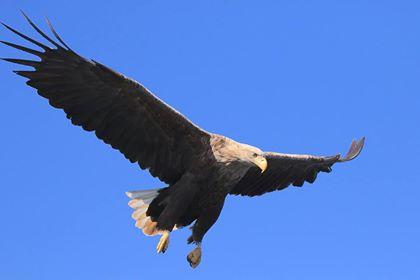 Eagle C9 39