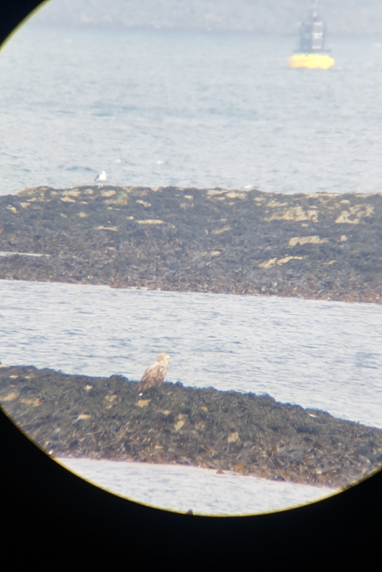 Photo Credits Lizzy. Eagle, taken through the telescope on a windy day!